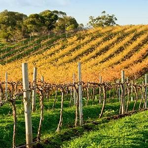 800x300-adelaide-australia-barossa-valley