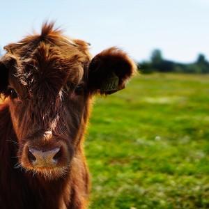 cow-animal-milk-calcium_1524163839985_363215_ver1.0_40194722_ver1.0