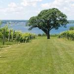 ventosa-vinyard-tree-geneva-grapevines-800x300-1437586311